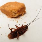 How Can You Prevent A Cockroach Infestation?