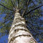 Trees Close To The House?…Should it Concern You?